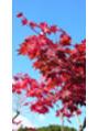 紅葉狩り&花見