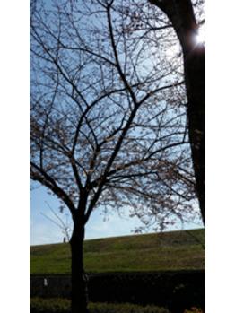 桜が咲く。春を感じるときは・・・_20180402_1