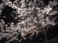 春から夏へ(^^)