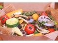 日々のエイジングケアに取り入れたい栄養素たち