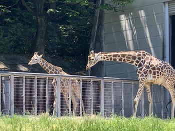 動物園_20200205_1