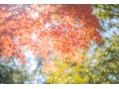 奈良散策♪
