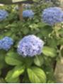 紫陽花苑☆