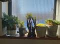 トータルセラピー ららぽーと富士見店稲の癒しの子たち