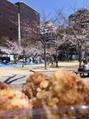 春は、桜とカラアゲ!