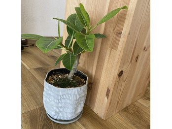 サロンの植物たちの成長_20210330_4