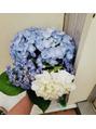 紫陽花でプチ開運♪