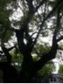 東大阪の石切神社にお参りに♪うらないも有名ですが