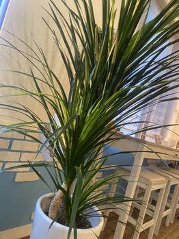 当サロンには植物がいっぱいです♪_20201017_2