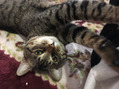猫と戯れる~