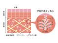 【豆知識】ストレッチによる美肌効果!?