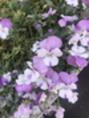 不思議なお花