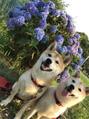 紫陽花とあなたとわたし