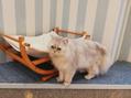 猫カフェMOCHAさん