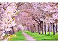 桜満開からの・・腸内環境
