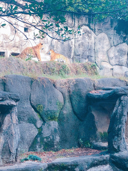 動物園_20191207_1