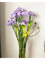 今週の花とG.Wの営業時間につきまして