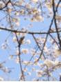 桜を見にいってきました♪