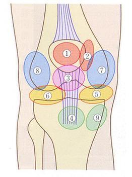 膝痛:お皿(膝蓋骨)の下の部分_20190428_1