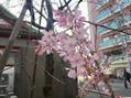 春のお知らせ♪