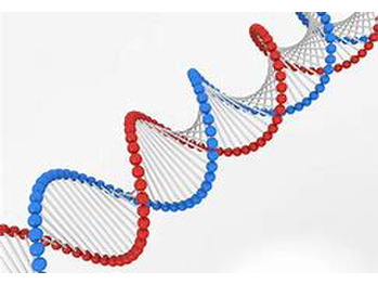 最新の遺伝子(DNA)検査 導入!_20181105_1