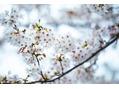 春の厳選specialコルギ♪