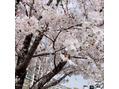 【April Dream 】4月1日は夢の日です!