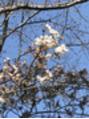 春にオススメ