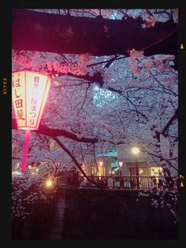 目黒川沿いの夜桜_20160403_1