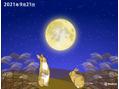 今夜は中秋の名月◯