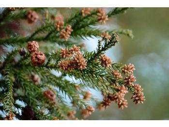 花粉症対策_20210228_1