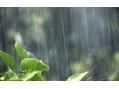 雨風(・・;)
