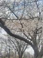春のお身体メンテナンス