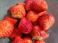 免疫力アップするフルーツ