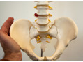 【効果がすぐわかる】EMS骨盤矯正