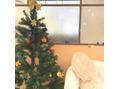 WILLの衣替え☆クリスマスキャンペーン