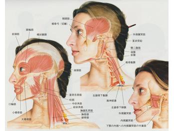 首の寝違えが頻発していますね|コロナ自粛の影響か?_20210716_2