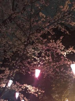 お花見~♪_20160409_2