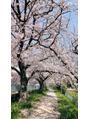 桜満開♪♪桜三昧♪