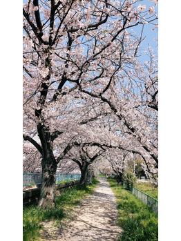 桜満開♪♪桜三昧♪_20190407_1