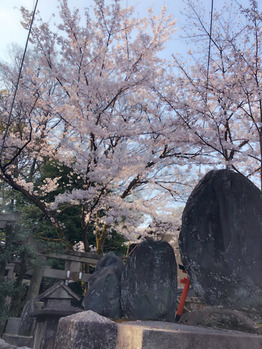 桜満開♪♪桜三昧♪_20190407_2