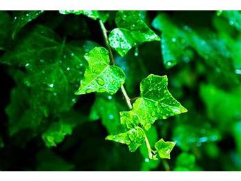 雨上がりの湿度_20200926_2