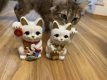 美を招く猫_20210620_1