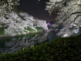 夜桜「千鳥ヶ淵」