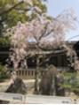 毎月1日は熱田神宮へ