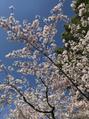 *春お散歩*