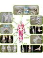 関節の仕組み