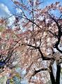 桜を見ながら♪