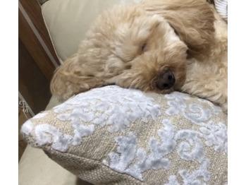 愛犬のお昼寝★☆_20191111_1