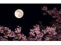 今夜の満月は『ピンクムーン』ですって♪